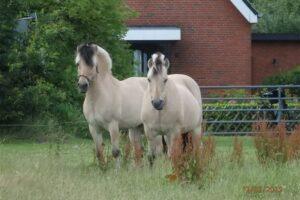 Kenrick und Jokke auf der Sommerwiese